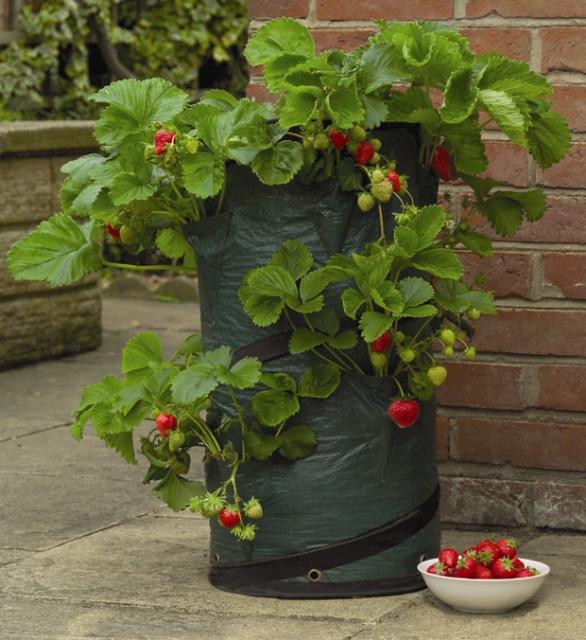 Jardini re de terrasse pour fraises - Planter des fraises en hauteur ...