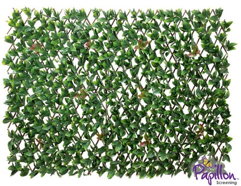 haie artificielle feuilles de laurier sur treillage extensible 1m x 2m papillon 44 99. Black Bedroom Furniture Sets. Home Design Ideas