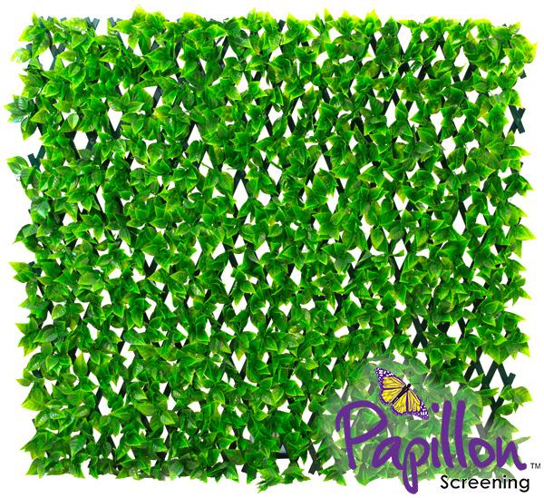 haie artificielle peuplier sur treillage extensible vert 1m x 2m papillon 39 99. Black Bedroom Furniture Sets. Home Design Ideas